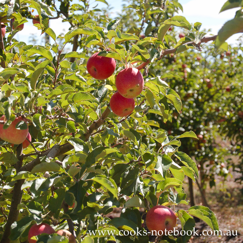 It's all about the apples at Sutton's Farm at Stanthorpe