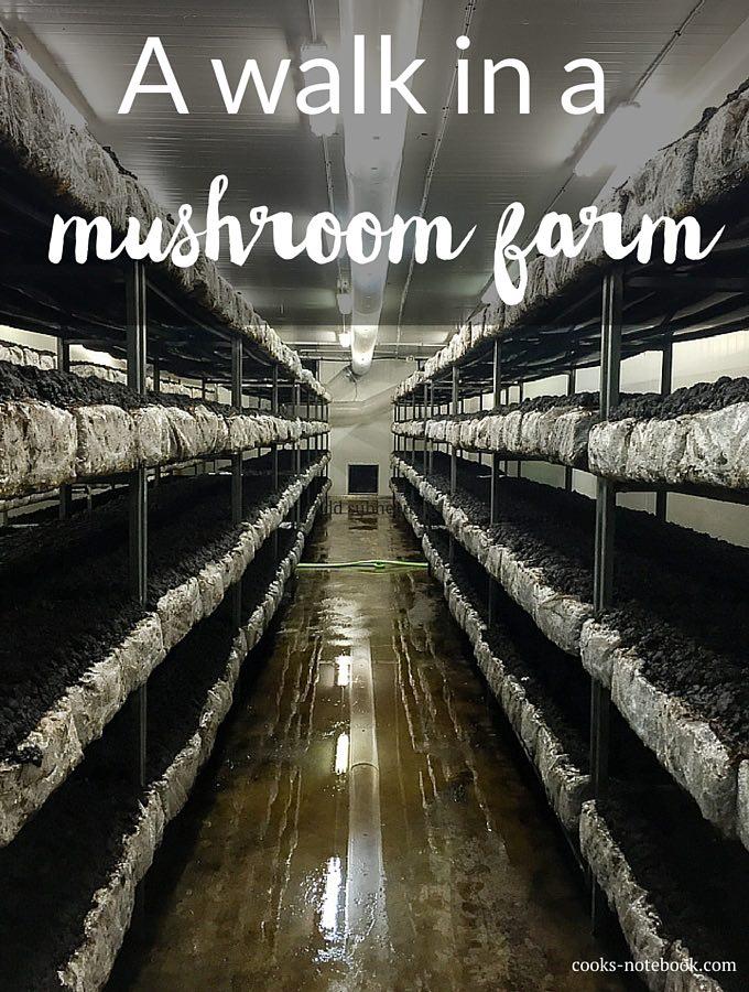 A walk in a mushroom farm